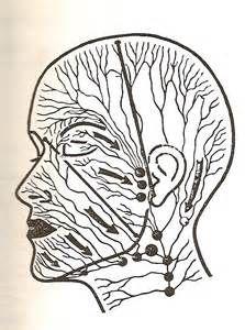 Head lymph