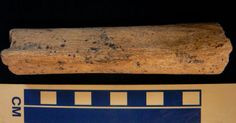 """A fragment of human leg bone discovered in Cumbria's Kents Bank in the 1990s has been found to be more than 10,000 years old by Ian Smith of Liverpool John Moores University and Hannah O'Regan of the University of Nottingham. """"Previous cave burials of humans from around this date have been in southern England, with later dates further north,"""" explained Smith."""