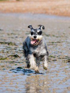 CORRERE CON IL CANE, ANDARE IN BICICLETTA O FARE DELLE CAMMINATE? Il bisogno di attività del cane