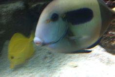 23 Blue Reef Aquarium, Fish, Pets, Animals, Animales, Animaux, Pisces, Animal, Animais