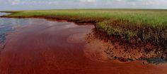 Resultado de imagen para efectos toxicos en el agua