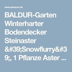 BALDUR-Garten Winterharter Bodendecker Steinaster 'Snowflurry', 1 Pflanze Aster ericoides: Amazon.de: Garten