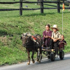 Amish children drive their buggy | by mountaintrekker2001