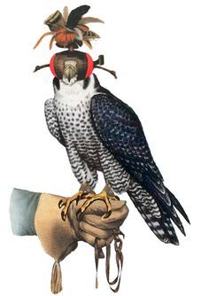 Art of Falconry or hunting with Birds of Prey