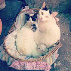 #Family #Famiglia #cat #cats #gatti #gatto #gattino #gattini #mici #micio #micetti #cuccioli #catsagram #catstagram #kitten #kitty #kittens #pet #pets #animal #animals #petstagram #petsagram #catsofinstagram