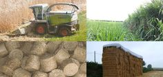 Energy crops pellets: a revolution for biomass sector
