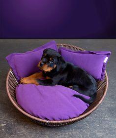 Hundebett von pet-interiors.de. Dog bed from pet-interiors.de