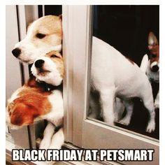 #Blackfriday#petsmart#dogs