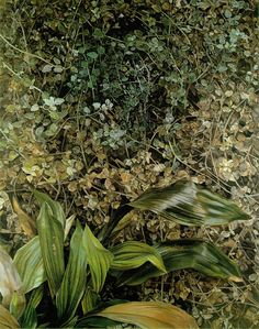 Two plants, Lucien Freud