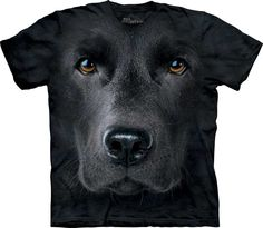 Labrador negro. #3255