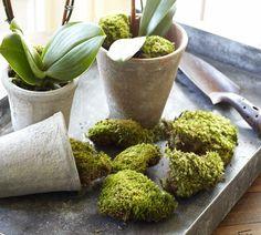 Mood Moss Vase Filler  potterybarn.com