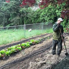 via @rockcreekcorner: Robyn is planting summer crops this week. Lettuces are going strong and look and taste amazing in our salads. Can't wait for peas peppers and beans! #pdx #pdxeats #pdxdrinks #Portland #Oregon #backyard #garden #drinks #food #FarmtoFork #FarmtoTable #locavore #eatlocal #Bethany #RockCreek #Beaverton #RockCreekCorner #Hillsboro #Tanasbourne #LunchSpecials #DrinkSpecials #Patio #growlers #Farm #SlowFood #myfab5 #craftbeer #brunch #pdxbrunch #hillsboronow