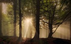 Photograph Forest Sun by Kilian Schönberger on 500px