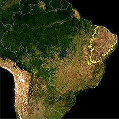 Flora da Caatinga Brasileira