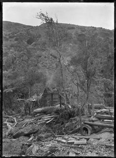 Anawhata Incline, used for logging near Piha. Nz History, Auckland, New Zealand, Coast, Landscape, Landscaping, Seaside