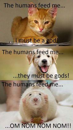 Funny Rats, Cute Rats, Funny Animal Jokes, Funny Animal Pictures, Cute Funny Animals, Animal Memes, Cute Baby Animals, Animals And Pets, Rata Dumbo