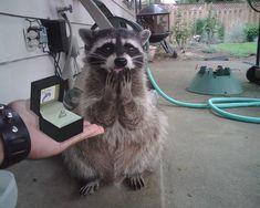 Trash panda said yes