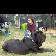 Big dog - so cute