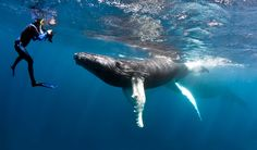 Todd Bretl Underwater Photography