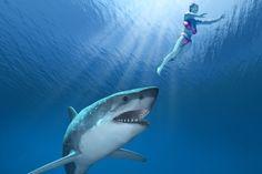 10 Wahrheiten über Savage Shark Attacks - http://bestelisten.com/10-wahrheiten-uber-savage-shark-attacks/