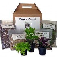 terrarium-kits-DIY Fairy Garden Plants, Fairy Garden Furniture, Diy Terrarium Kit, Potting Soil, Diy Kits