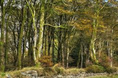 Dartmoor copse near Princetown (England) by Baz Richardson