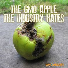 The GMO Apple The Industry Hates. Read More Here: http://www.seattleweekly.com/home/950231-129/the-gmo-apple-the-industry-hates