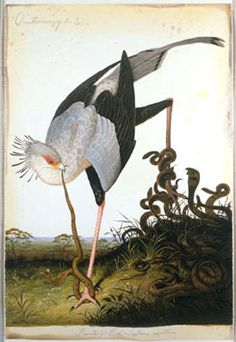 Ornithomancy Walton Ford