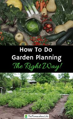 How To Do Garden Planning The Right Way Spring is COMING! This means it's time to start seeds! So you need to know when and what to start, and how much. Here's how to make your best garden plan ever! Garden Seeds, Planting Seeds, Permaculture Design, Permaculture Garden, Bonsai Seeds, Home Vegetable Garden, Forest Garden, Aquaponics System, Aquaponics Diy