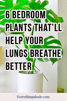 Be Kind To Yourself, Improve Yourself, Coral Bedroom, Positive Self Affirmations, Bedroom Plants, Indoor Plants, Indoor Gardening, Gardening Tips, Home Repair