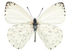 source: Free Stock Photos  ~ beautiful white butterfly