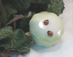 Lady Bug Keepsake Box - Capture those summer time memories!