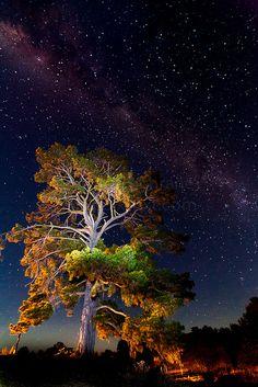 Via Láctea sobre a árvore. Fotografia feita na histórica cidade mineira de Hill End, Austrália.  Fotografia: Natecochrane no Flickr.