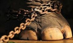 #Good #News #Italy #Animal #Amnesty #Protest #Against #Use #Of #Circus #Animals