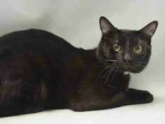 """Beautiful  Max is only 11 months old and dumped by terrible people who have """" personal problems """" don't we all? He is doomed to die at noon tomorrow  at Brooklyn ACC shelter  April 14. .please help him save his life..visit pets on death row on Facebook URGENT"""
