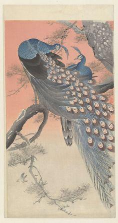Twee pauwen op boomtak, Ohara Koson, 1900 - 1930