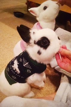 bunnies in sweaters rabbit dogvacay