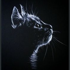 Introduction to Pencil Drawing Supplies & Techniques - Katzen / Cat , Introduction to Pencil Drawing Supplies & Techniques Výsledek obrázku pro white pencil on black paper draw Paintings. Art Scratchboard, Animal Drawings, Pencil Drawings, Drawing Animals, Pencil Art, Black Paper Drawing, Pencil Drawing Tutorials, Art Tutorials, Scratch Art