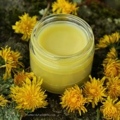 Dandelion Salve Recipe Made with Dandelions from your yard