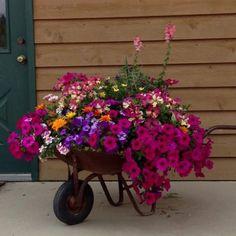 Virágok | Flowers - Megaport Media