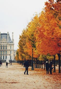 Autumn in Paris #fall #leaves #travel #paris #nature