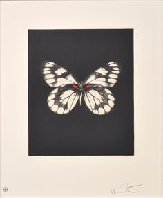 DAMIEN HIRST - BUTTERFLY (PORTFOLIO OF 12) - WENG CONTEMPORARY http://www.widewalls.ch/artwork/damien-hirst/butterfly-portfolio-of-12/