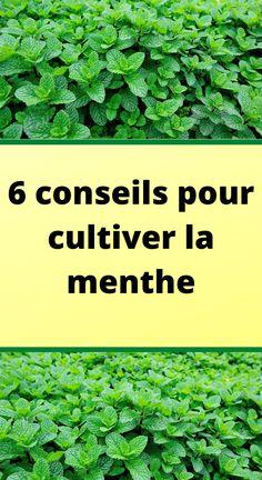 Planter Menthe, Orquideas Cymbidium, Lettuce, Herbs, Culture, Vegetables, Gardens, Garden Deco, Backyard Farming