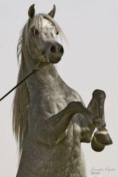Mohamed Abdo horse - Поиск в Google