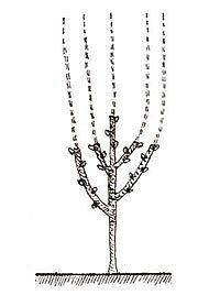 Mulberry Tree, Garden Trees, Silver, Gardening, Jewelry, Garden, Plant, Lawn And Garden, Jewlery