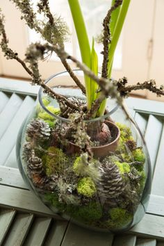 An amaryllis bulb placed in a small pot is set inside a Roost terrarium. Surrounded by natural mosses, sticks, pine cones and pods—there is an illusion that the bulb is growing from the bottom of a forest floor. Styling by Karin Lidbeck Brent, Photography by Joe Keller