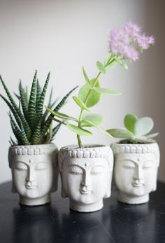 Plants in Buddha heads