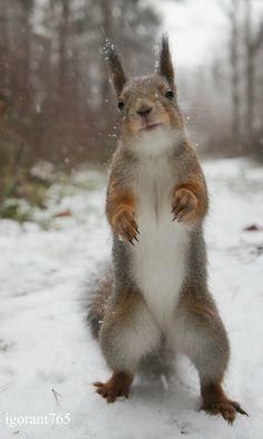 Squirrel doing Tai Chi. Begin Tai Chi