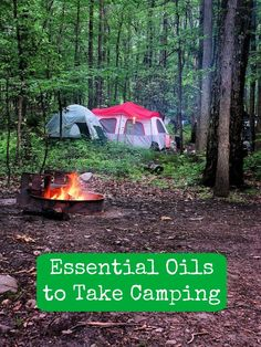 Are you going camping this summer? Then you absolutely need to read this essential oils guide for camping!
