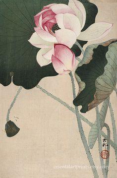 Japanese Painting, Chinese Painting, Art Pariétal, Ohara Koson, Art Occidental, Lotus Painting, Vintage Illustration Art, Lotus Art, Japan Art